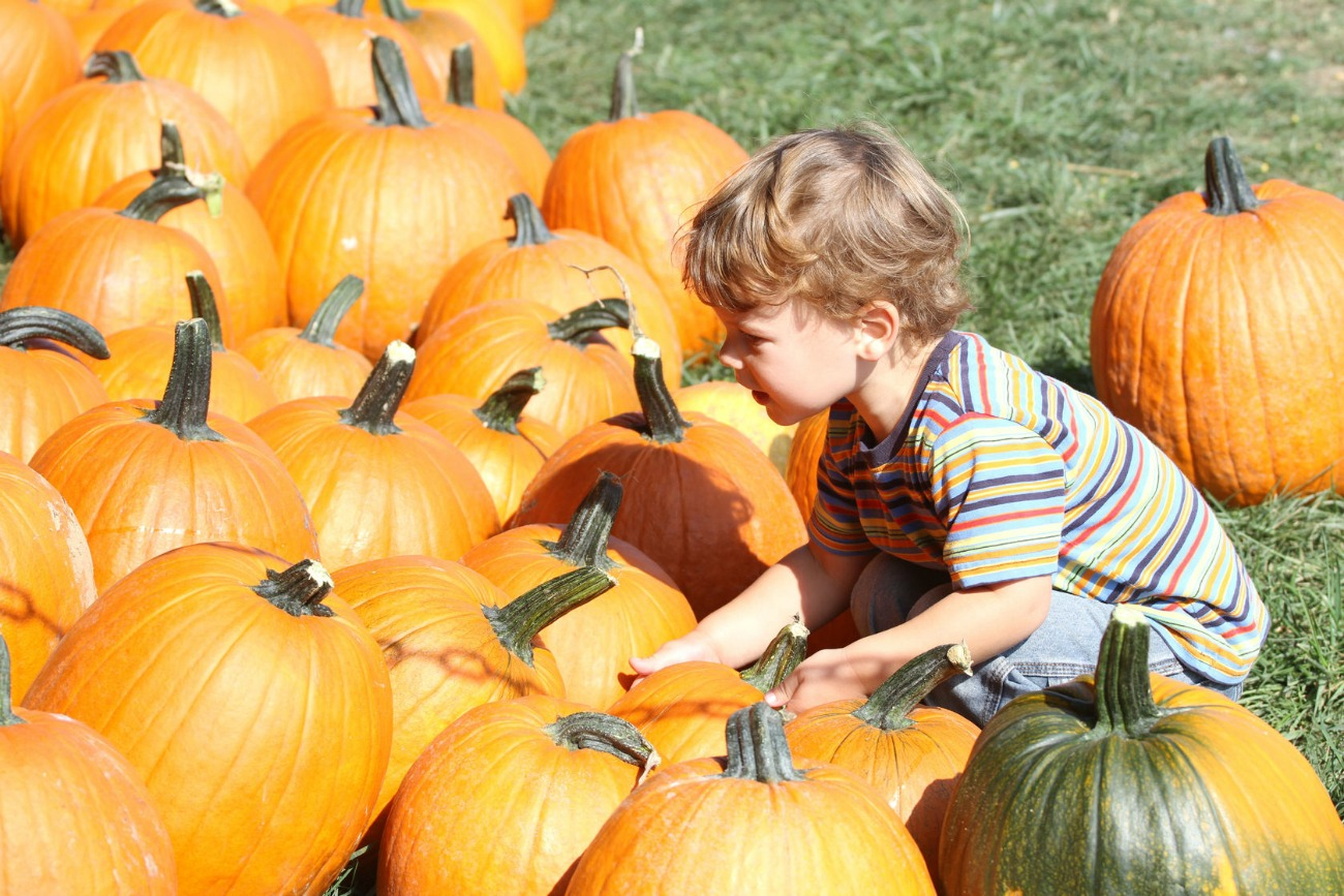 The Best Places for Pumpkin Picking in NJ