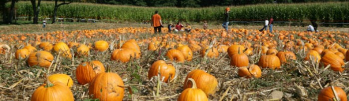 pumpkin picking in NJ
