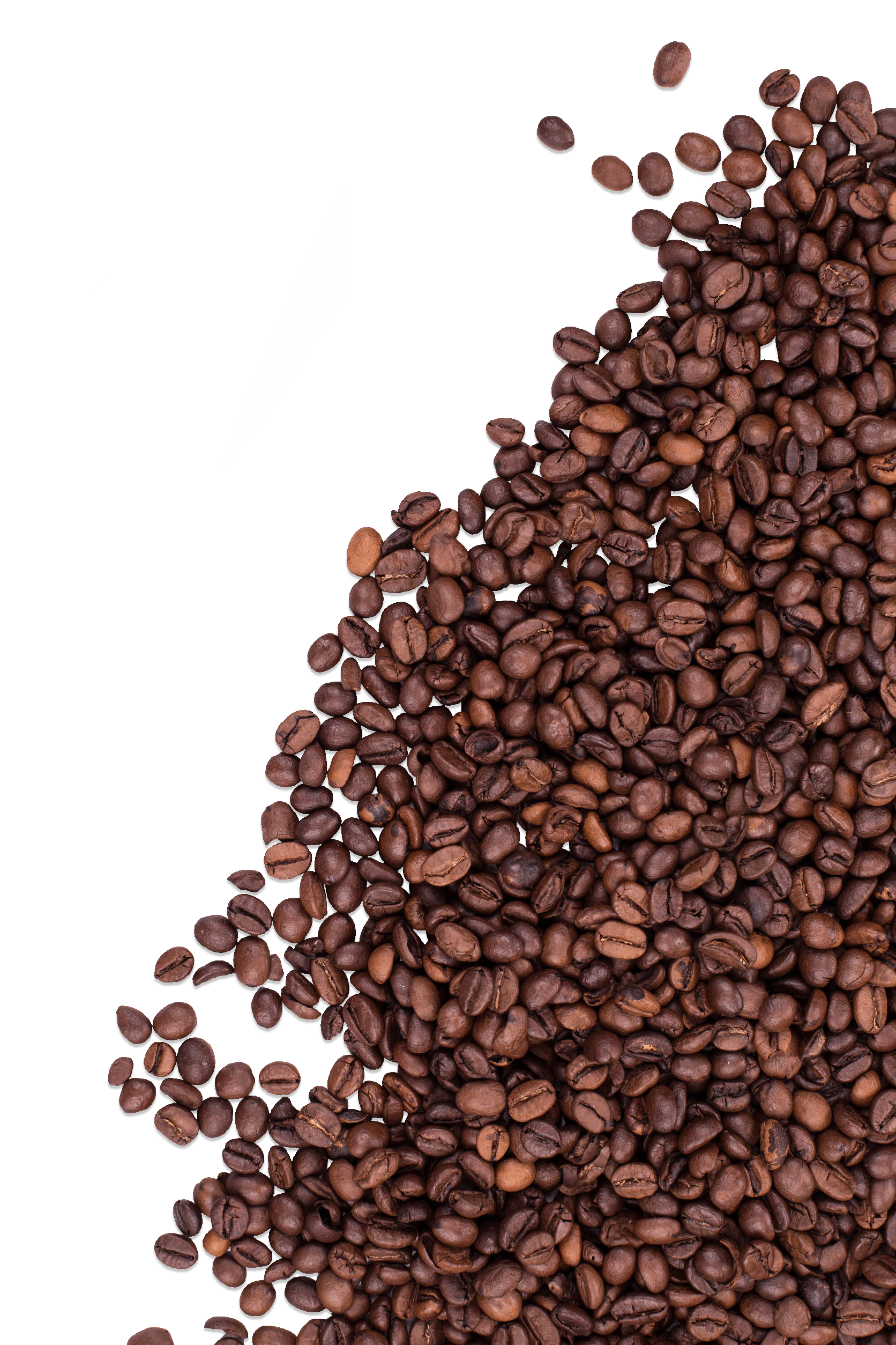 coffee marketing company nj